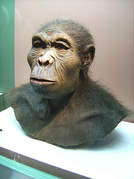 Scientiffic reconstruction of a Homo habilis, photographed 25 March 2007 at the Westfälisches Museum für Archäologie, Herne, by Lillyundfreya
