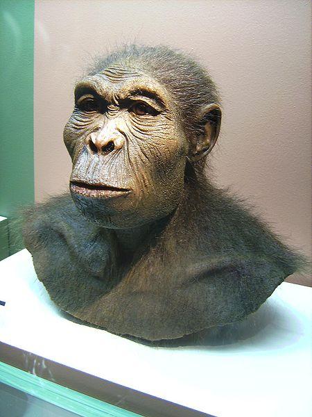 Scientiffic reconstruction of a Homo habilis, photographed 25 March 2007 at the Westfälisches Museum für Archäologie, Herne, by Lillyundfreya