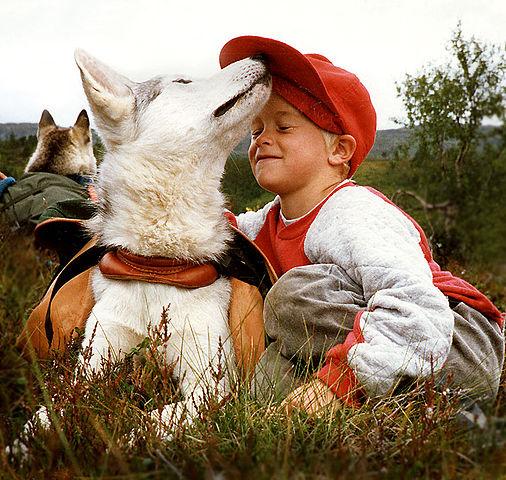 Packsaddle (Kløv på Siberian Husky), photographed by Per Harald Olsen (Perhols)