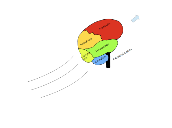 The lobes of the human cerebral cortex and the cerebellum (blue). [The version here has an arrow and motion streaks added to the original.] The brain is seen from the right side, the front of the brain (above the eyes) is up and to the right.