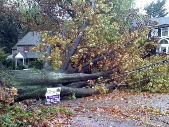 Damage from Hurrican Sandy in Wyncote, Cheltenham Township, Pennsylvania, USA, photographed by Peetlesnumber1 .