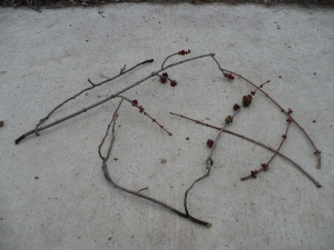 Twigs that had been chewed off by squirrels and unceremoniously dropped.  Photo by thepoliblog.WordPress.com.