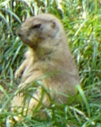 Prairie Dog, the poliblog, 2012-06-23 .