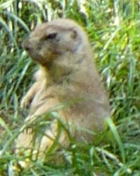 Prairie Dog, the poliblog, 2012-06-23 .