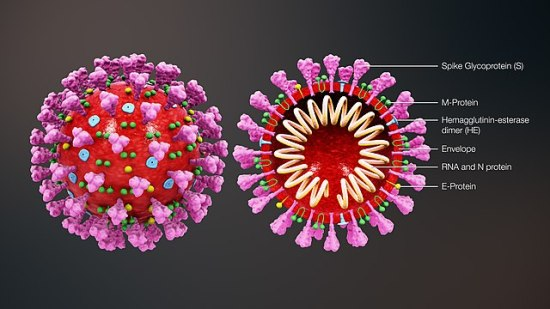 A still from the 3D medical animation https://www.scientificanimations.com/coronavirus-symptoms-and-prevention-explained-through-medical-animation/ , 30 January 2020.